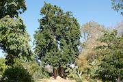 Fullerton-Arboretum 2 (1)